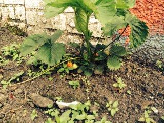 garden 12
